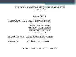 EL CEREBELO - biosicologia2011
