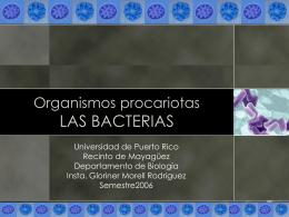 Organismos procariotas LAS BACTERIAS