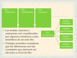 Clase Merostomata