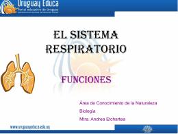 El sistema respiratorio - Portada Principal Uruguay Educa