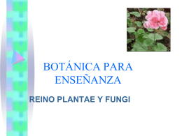 Adaptaciones de las plantas para vivir en la tierra
