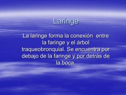 Laringe - anatomiayplastinacion