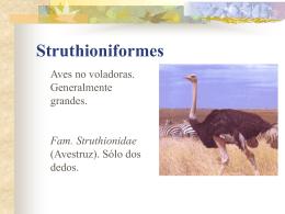 Struthioniformes