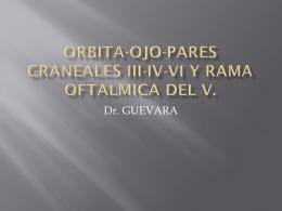 ORBITA-OJO-PARES CRANEALES II-III-IV