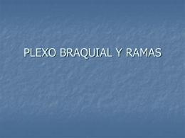 Diapositiva 1 - anatomiayplastinacion