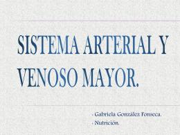 Sistema Arterial y Venoso mayor.