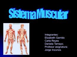 Sistemas de nuestro cuerpo