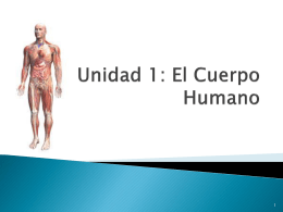 Unidad 1: El Cuerpo Humano - IED | Bachillerato para …