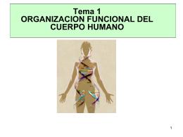 TEMA 2 ORGANIZACION FUNCIONAL DEL CUERPO …