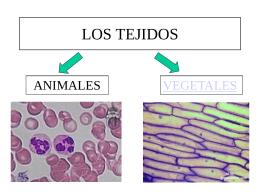 LOS TEJIDOS - wikisanjorge
