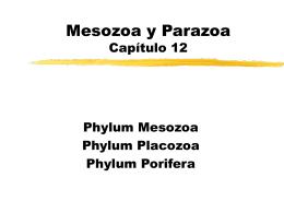 Metazoa Mesozoa y Parazoa