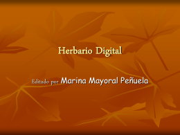 Herbario Digital - pibiobach