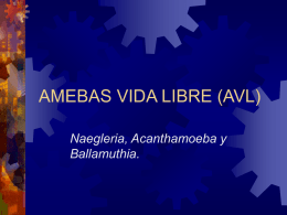 AMEBAS VIDA LIBRE (AVL) - biblioceop | Just another