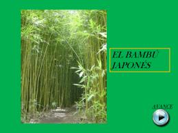 EL BAMBU JAPONES