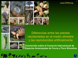 Diferencias entre las plantas