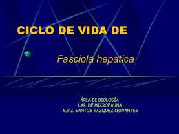 CICLO DE VIDA DE