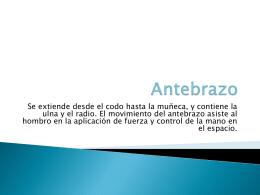 Antebrazo