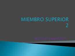 MIEMBRO SUPERIOR 2