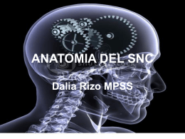 ANATOMIA DEL SNC - Neurodx2009b's Blog | Just another