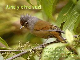 Una y otra vez - Bienvenidos :: Web de Sebastian Salado