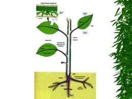 El agua y las plantas evapotranspiracion