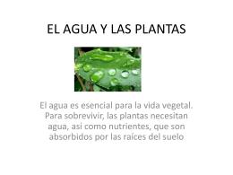 EL AGUA Y LAS PLANTAS - Transmiel de Costa Rica