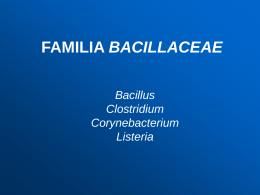FAMILIA BACILLACEAE - Maria Cristina Vasquez