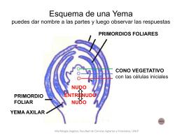 Esquema de una Yema de nombre a las partes