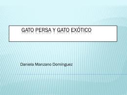 GATO PERSA Y GATO EXOTICO