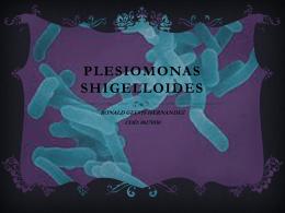 Plesiomonas shigueloides
