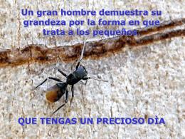 El_ingenio_de_una_hormiga