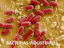 BACTERIAS INDUSTRIALES