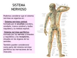 SISTEMA NERVIOSO - Sciencia