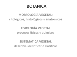 BOTANICA - IDTanahamedt