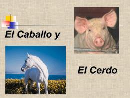 Diapositiva 1 - Ciudad Redonda