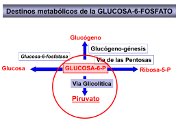 METABOLISMO - quimicabiologicaunsl