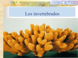 Los invertebrados - Gobierno de La Rioja