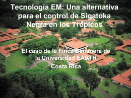 EM: Una alternativa para el control de Sigatoka Negra en
