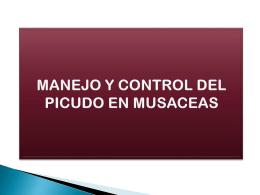 CONTROL BIOLOGICO DEL PICUDO DE LAS MUSACEAS