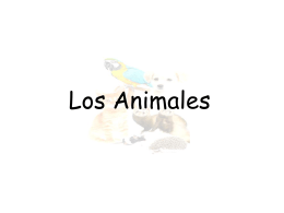 Los Animales - Mr. Schepisi