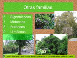 Otras familias: - Listado de Alojamientos en www.aloj.us.es