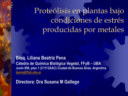 Actividad de Proteasas en cotiledones de girasol.