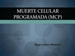 Muerte Celular Programada