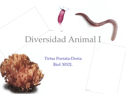 Diversidad Animal I