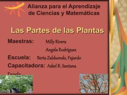 Las Partes de las Plantas - .: Alacima :. Alianza para el