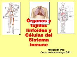 ORGANOS LINFOIDES PRIMARIOS TIMO
