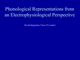 Phonological Representations from an Electrophysiological