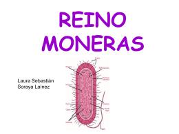 REINO MONERAS - IES Valle del Jiloca