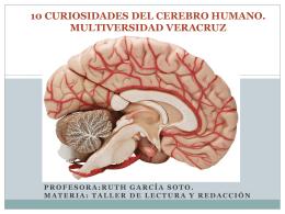 10 CURIOSIDADES DEL CEREBRO HUMANO.
