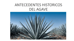 ANTECEDENTES HISTORICOS DEL AGAVE